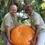 ฟักทองยักษ์ พันธุ์ บิ๊กแม็กซ์ - Big Max Giant Pumpkin thumbnail 3