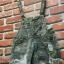 เอี้ยมกางเกงขาสั้นขาดลายทหาร thumbnail 9
