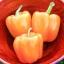 พริกหวานแคลิฟอร์เนียสีส้ม - Orange Sweet Pepper thumbnail 2
