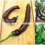 พริกดำ พาสซิล่า - Pasilla Bajio Pepper thumbnail 4