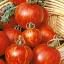มะเขือเทศเสือ - Tigerella Tomato thumbnail 1