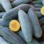 ฟักทองกล้วยสีฟ้า - Guatemalan Blue Banana Squash thumbnail 1