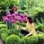 แอลเลี่ยมยักษ์ - Globemaster Allium thumbnail 3