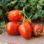มะเขือเทศอะมิสเพสท์ - Amish Paste Tomato thumbnail 2