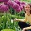 แอลเลี่ยมยักษ์ - Globemaster Allium thumbnail 4