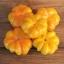พริกฟักทองสีเหลือง - Yellow Pumpkin Pepper thumbnail 2