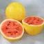 แตงโมเปลือกเหลือง - GOLDEN MIDGET Watermelon thumbnail 4