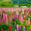 รัสเซล ลูปิน - คละสี - Mix Russell Lupin Flower thumbnail 3