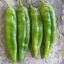พริกเขียวใหญ่ อนาไฮม์ - Anaheim Pepper thumbnail 1