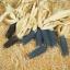 ข้าวโพดชาแมนบลู - Shaman's Blue Pop Corn thumbnail 2