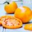 มะเขือเทศ ซันเรย์ - Sunray Tomato thumbnail 2