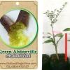 <<<<สั่งซื้อ>>>ต้นมะนาวคาเวียร์เสียบยอดสายพันธุ์ green alstonville size S