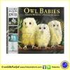 Story Book & DVD : Owl Babies : Martin Waddell & Patrick Benson หนังสือนิทานภาพพร้อมดีวีดี Walker Books