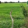 ที่ดิน ใกล้ถนนบางเลน-พุทธมณฑล ศาลายา นครปฐม