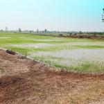 ที่ดิน ที่นา 16ไร่ ติดถนนติดคลอง คอวัง บ้านแหลม บางปลาม้า สุพรรณบุรี