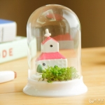 ชุดปลุกต้นไม้ Mini World < พร้อมส่ง >