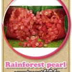 ต้นมะนาวคาเวียร์เสียบยอดสายพันธุ์ Rainforest Pearl Size M