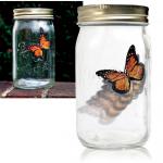 ขวดโหลผีเสื้อบิน Butterfly jar