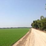 ที่ดิน พร้อมที่นา ติดถนน ติดคลอง 187ไร่ กฤษณา บางปลาม้า สุพรรณบุรี