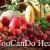 Fruits with benefits ผลไม้ที่มีประโยชน์
