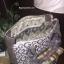 กระเป๋าถือทรงสุดฮิต จากแบรนด์ GUESS BOWLING BAG 2017 ราคา 1,590 บาท Free Ems thumbnail 8