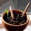 ดินสอปลูกต้นไม้ sprout pencil thumbnail 10