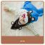 AP179••เซตหมวก+ผ้ากันเปื้อน•• / หมี [สีน้ำตาล+ฟ้า] thumbnail 4