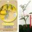 <<<<สั่งซื้อ>>>>ต้นมะนาวคาเวียร์เสียบยอดสายพันธุ์ Collete size S thumbnail 1