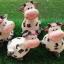 ตุ๊กตาวัวนม set 4 ตัว thumbnail 3