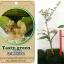 <<<<สั่งซื้อ>>>>ต้นมะนาวคาเวียร์เสียบยอดสายพันธุ์ tasty green size S thumbnail 1