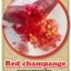 ต้นมะนาวคาเวียร์เสียบยอดสายพันธุ์ Red Champange Size L thumbnail 1