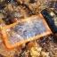 สุดคุ้ม ซองกันน้ำมือถือคุณภาพดี ป้องกันสิ่งสกปรก อยู่ในน้ำยังทัชสกรีน ถ่ายรูป หรือวิดีโอได้ชัดเจน ผลิตจาก PVC ใส ใส่มือถือได้ทุกขนาด มีสายห้อยคอ thumbnail 18