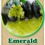 ต้นมะนาวคาเวียร์เสียบยอดสายพันธุ์ Emerald Size M thumbnail 1
