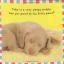 หนังสือผ้า Baby Bunny จาก Priddy Books thumbnail 6