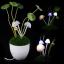 โคมไฟ Avatar Mushroom Lamp thumbnail 6