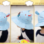 HT484••หมวกเด็ก•• / หมวกปีกกว้าง-DH (สีฟ้า) thumbnail 5