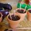 ดินสอปลูกต้นไม้ sprout pencil thumbnail 5
