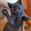 แมวจับหนู Feline Frenzy Cat Toy thumbnail 5
