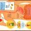 หนังสือบอร์ดบุ๊คเปิดสนุก Flap book Look inside your body by Usborne thumbnail 4