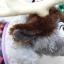 ตุ๊กตากวางเรนเดียร์ Sven Frozen thumbnail 7