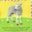 หนังสือผ้า Baby Bunny จาก Priddy Books thumbnail 3