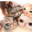หมอนซุกมือลายหน้าแมว 3D thumbnail 1