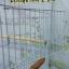 กรง#507 (ไซส์L) คละสี (ส่ง EMS) thumbnail 2