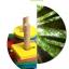 ของเล่นไม้ บล็อคไม้สวมหลัก เสริมพัฒนาการ รูปเต่าทอง thumbnail 12
