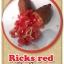 ต้นมะนาวคาเวียร์เสียบยอดสายพันธุ์ Ricks Red Size M thumbnail 1