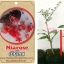 <<<<สั่งซื้อ>>>>ต้นมะนาวคาเวียร์เสียบยอดสายพันธุ์ Mia rose size S thumbnail 1