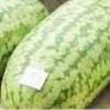 แตงโมยักษ์ Gaiant Wotermalon / 5 เมล็ด