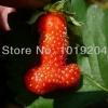 สตรอเบอรี่ Sexy strawberry /30 เมล็ด