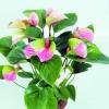 ดอก Anthurium seeds / 10 เมล็ด