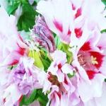 ดอก Barberry bush Seeds (ขาว) / 30 เมล็ด